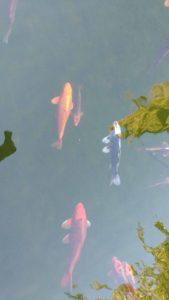 Monasterio Parral peces